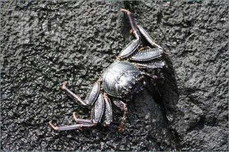 Aama-Crab-769139.jpg