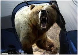 bear in tent.jpg