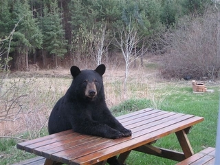 bear_table.jpg