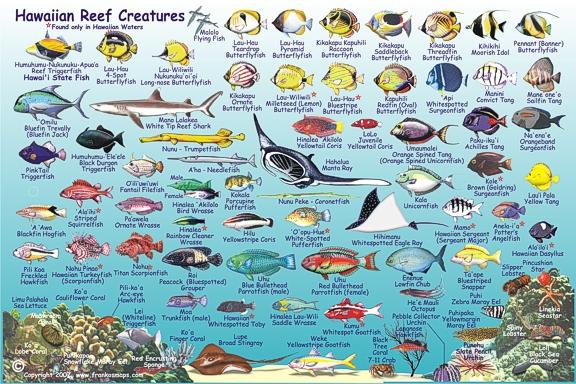 HawaiianIslandsFishCard2007SideTwo2.jpg