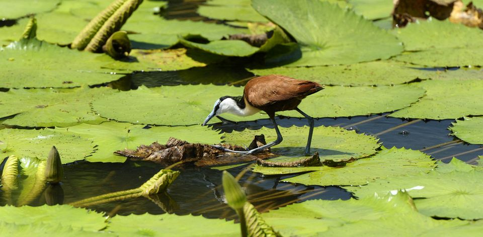 Jacana_960_472_80auto_s_c1_center_bottom.jpg