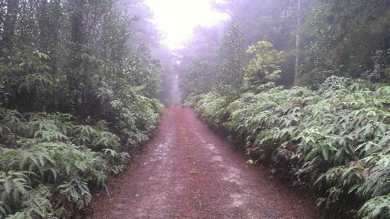 munro-trail.jpg