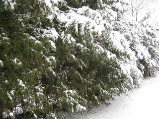Winter-191.jpg