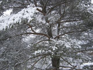 Winter-193.jpg