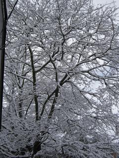 Winter192.jpg