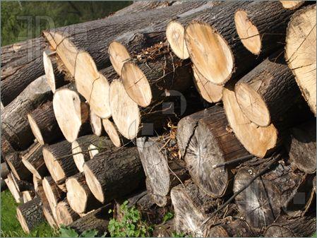 Wood-Logs-1673574.jpg